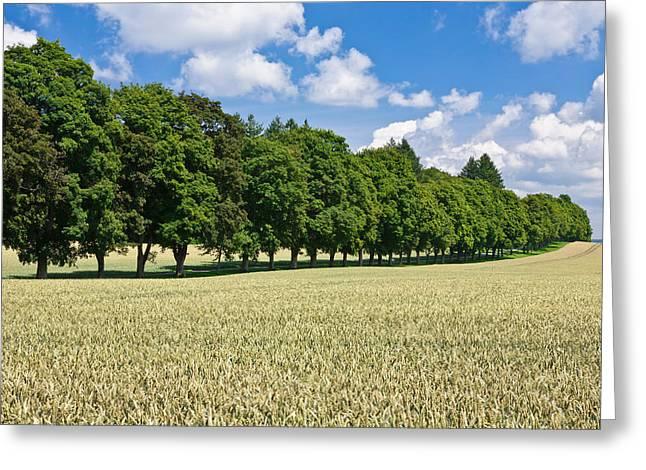 Treelined In A Cornfield Greeting Card