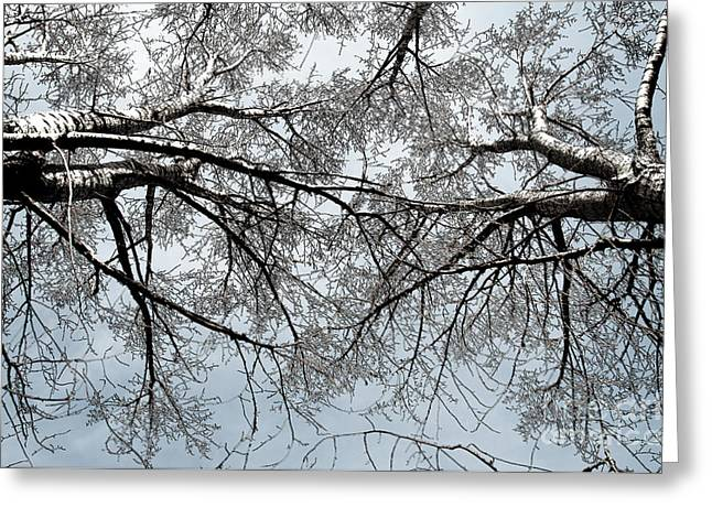 Greeting Card featuring the photograph Trees  1 by Minnie Lippiatt