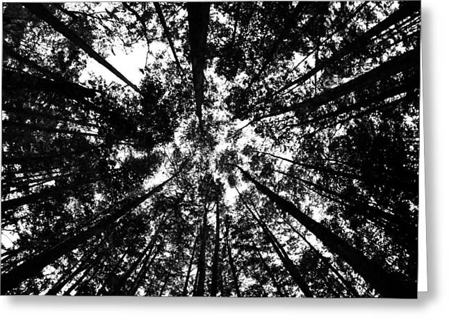 Greeting Card featuring the photograph Trees Above Me by Daniel Woodrum