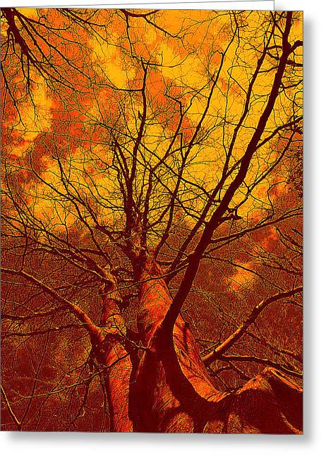 Greeting Card featuring the photograph Trees by Allen Beilschmidt