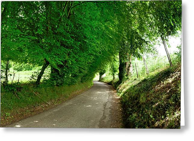 Trees Along A Road Greeting Card by Panoramic Images