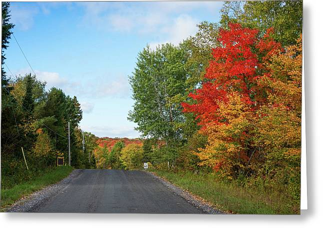 Trees Along Road In Autumn, Ontario Greeting Card