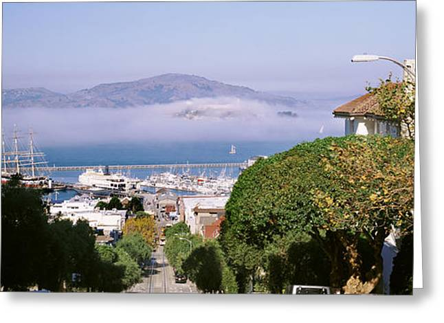 Trees Along The Hyde Street, San Greeting Card by Panoramic Images
