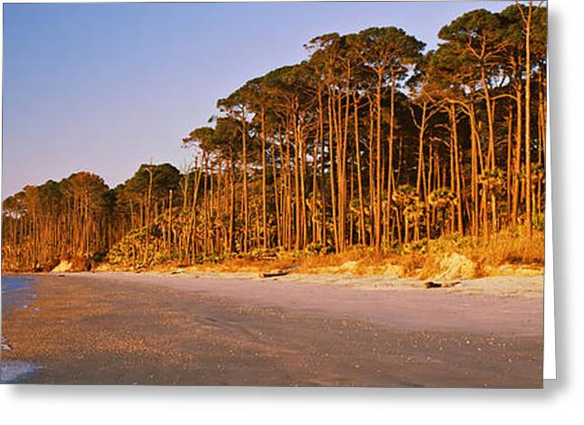 Trees Along The Shoreline, Hunting Greeting Card by Panoramic Images