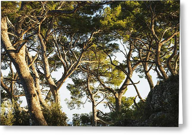Trees And Blue Sky_ Portofino, Liguria Greeting Card by Yves Marcoux