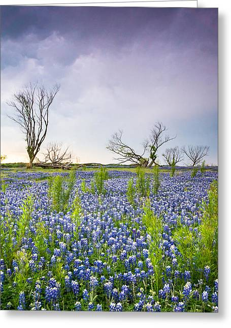 Trees And Bluebonnets On A Stormy Day - Wildflower Field - Vertical Greeting Card by Ellie Teramoto