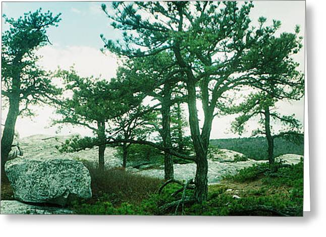 Trees And Boulders Along The Gertrudes Greeting Card