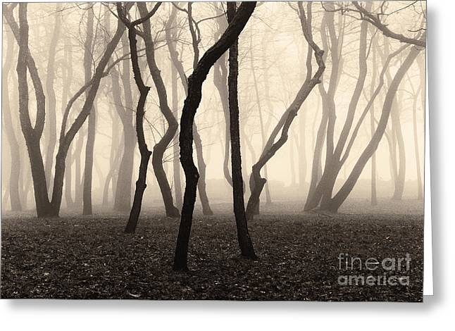 Trees And Fog No. 1 Greeting Card