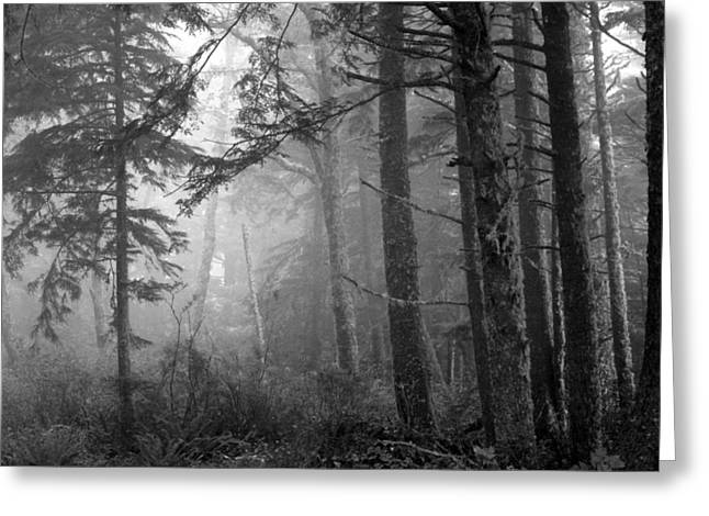 Greeting Card featuring the photograph Trees And Fog by Tarey Potter