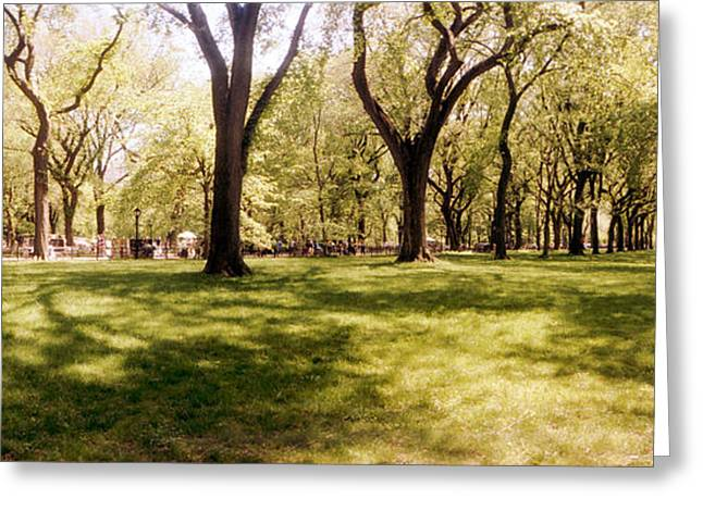 Trees And Grass In A Central Park Greeting Card