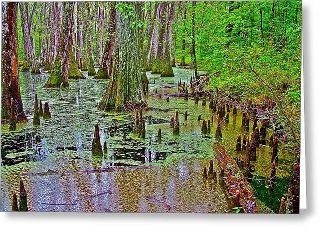 Trees And Knees In Tupelo/cypress Swamp At Mile 122 Of Natchez Trace Parkway-mississippi Greeting Card by Ruth Hager