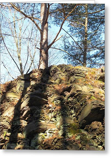 Greeting Card featuring the photograph Trees And Shadows by Melissa Stoudt