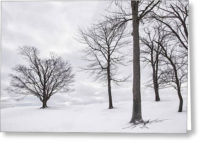 Trees And Snow Greeting Card