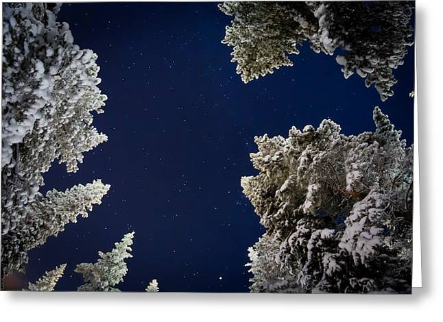 Trees And Stars, Cold Temperatures Greeting Card