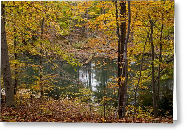 Trees And Water  Greeting Card by Tim Fitzwater
