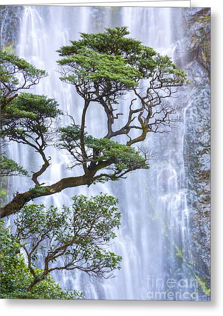 Trees And Waterfall Greeting Card