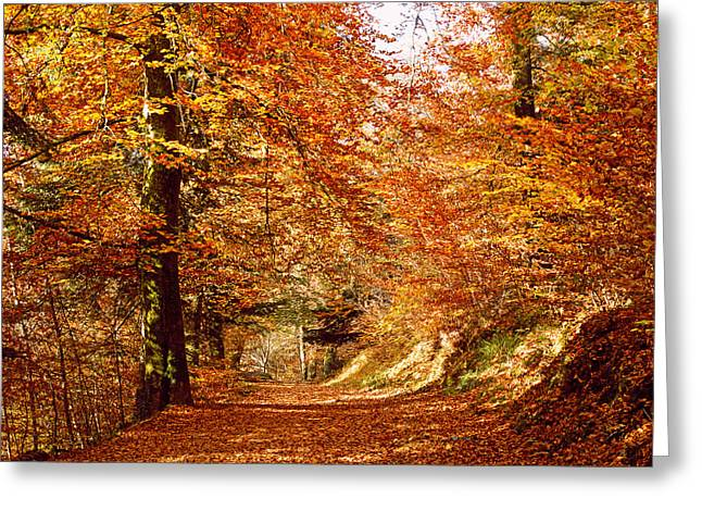 Trees At Huelgoat Forest In Autumn Greeting Card