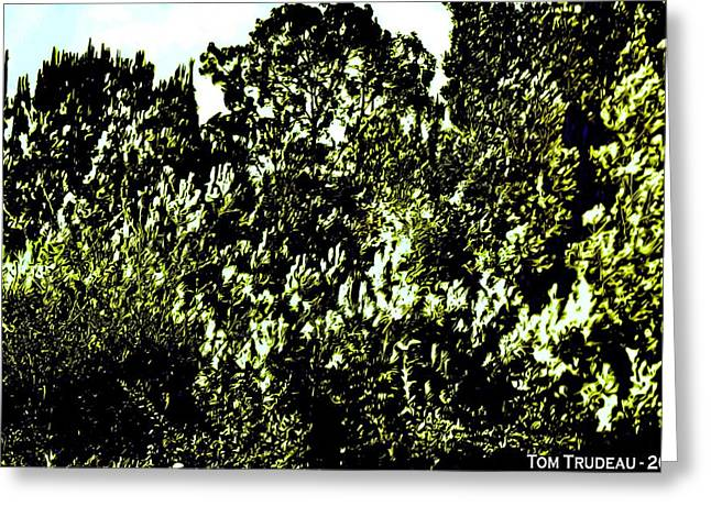 Trees At Phillipe's Greeting Card