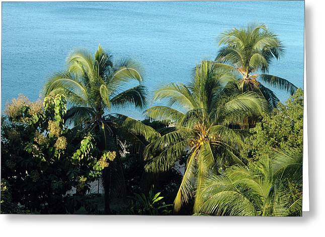 Trees At The Beach Greeting Card