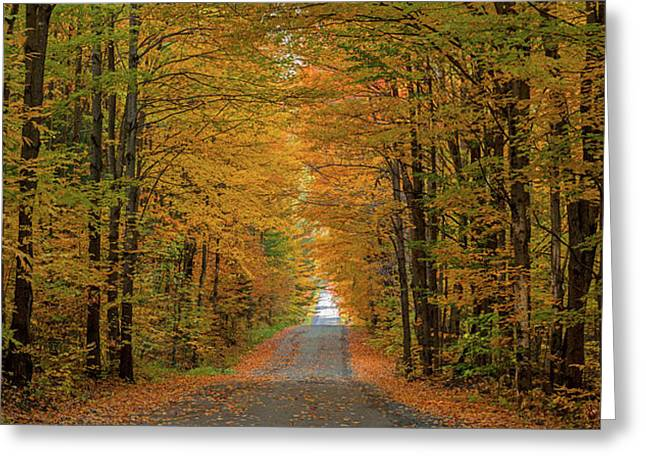 Trees Both Sides On A Dirt Road, Iron Greeting Card
