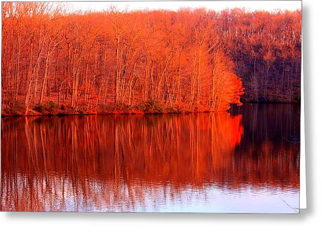 Trees By River Greeting Card by Jose Lopez