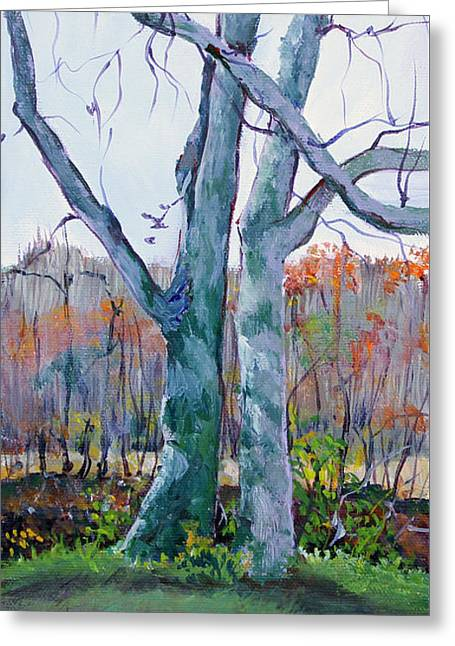 Sister Trees Greeting Card by Janet Felts