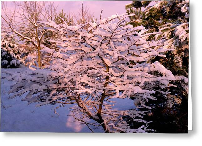 Trees Covered In Snow Greeting Card by Maurice Nimmo/science Photo Library