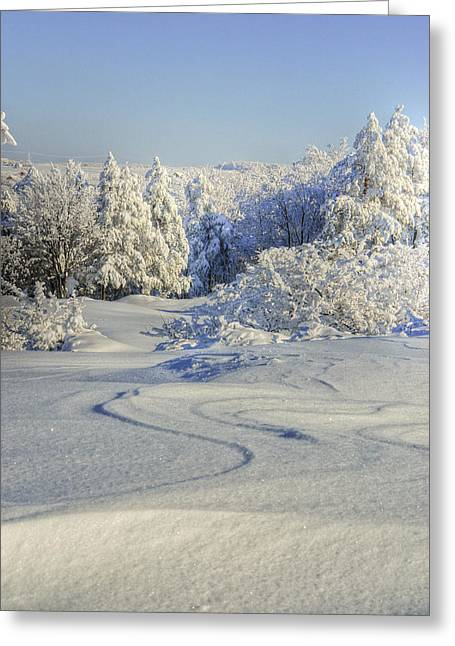 Trees Covered With Snow In A Sunny Winter Day Greeting Card