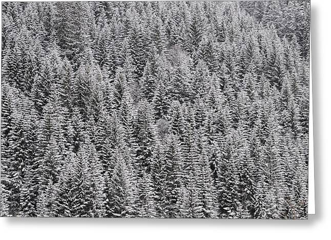 Trees Covered With Snow Greeting Card by Matthias Hauser