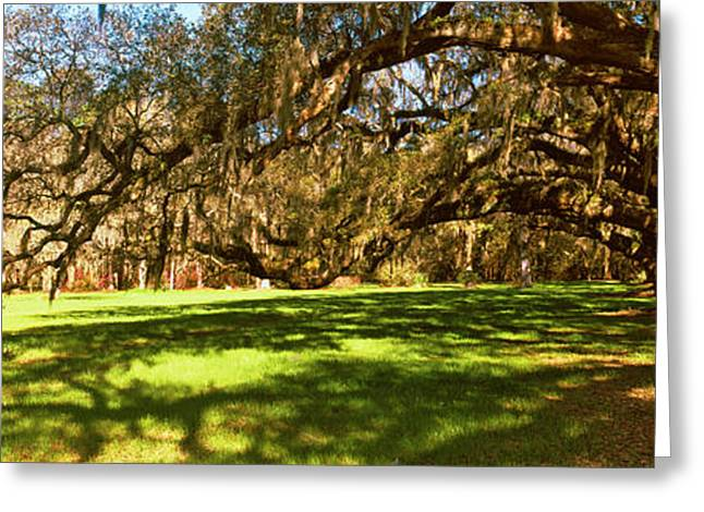 Trees Covered With Spanish Moss Greeting Card by Panoramic Images