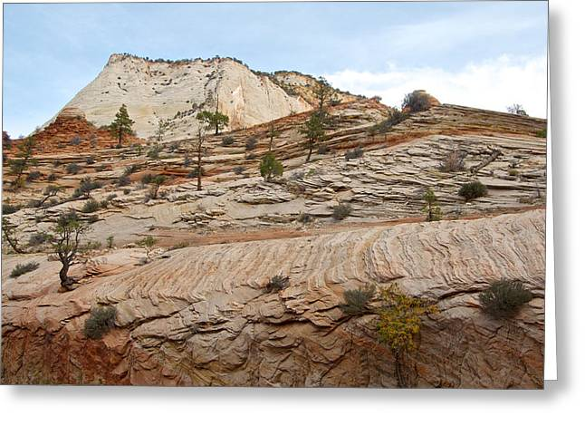 Trees Growing Out Of Rock Along Zion-mount Carmel Highway In Zion Np-ut Greeting Card by Ruth Hager