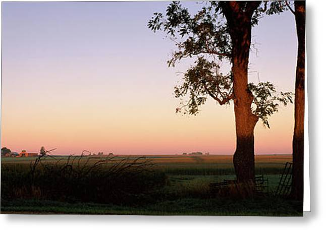 Trees In A Farm At Dusk, Ogle County Greeting Card by Panoramic Images