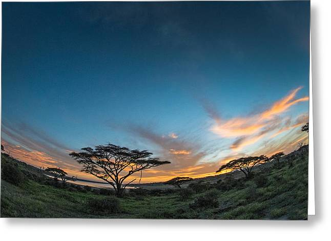 Trees In A Field At Sunset, Ndutu Greeting Card by Panoramic Images