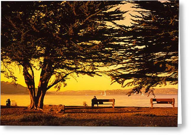 Trees In A Field, Crissy Field, San Greeting Card