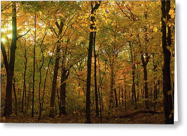 Trees In A Forest, Delnor Woods Park Greeting Card by Panoramic Images