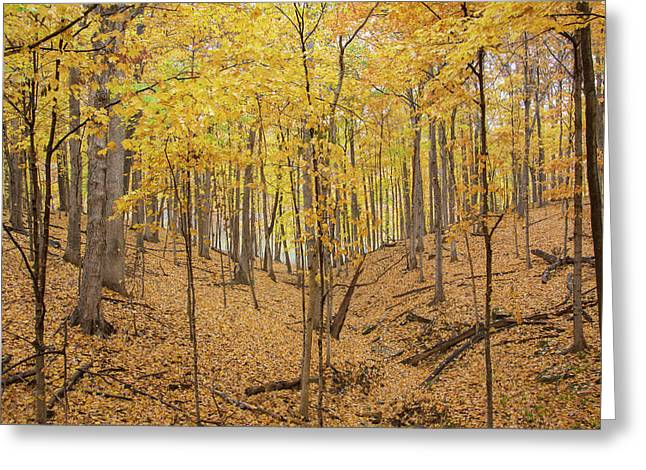 Trees In A Forest During Autumn Greeting Card by Panoramic Images