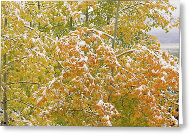 Trees In A Forest, Grand Teton National Greeting Card by Panoramic Images