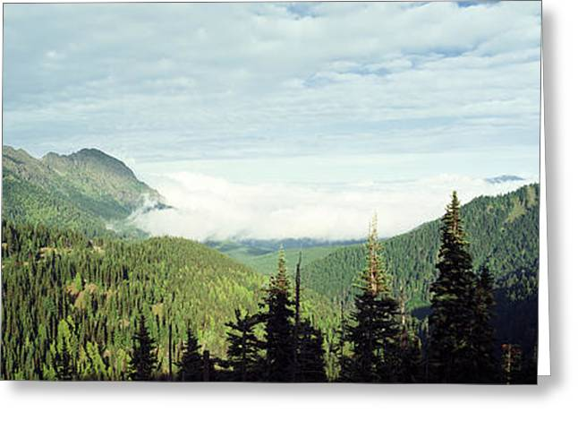 Trees In A Forest, Hurricane Ridge Greeting Card