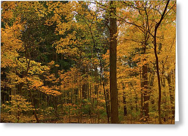 Trees In A Forest, Morton Arboretum Greeting Card by Panoramic Images
