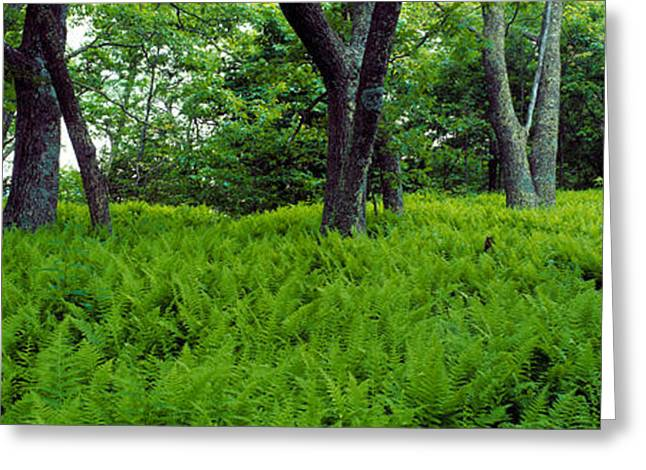Trees In A Forest, North Carolina, Usa Greeting Card by Panoramic Images