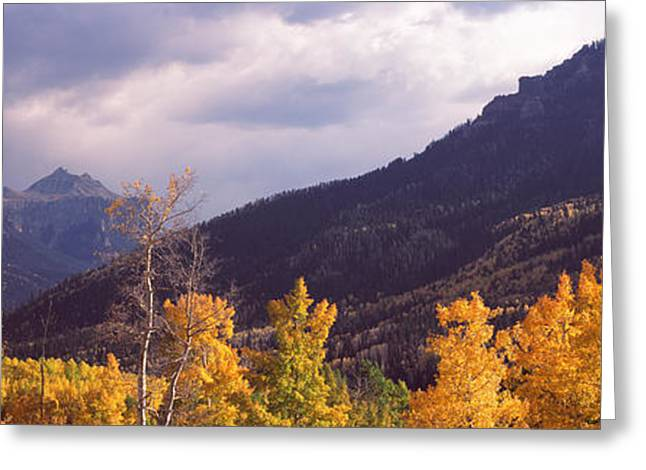 Trees In A Forest, U.s. Route 550 Greeting Card by Panoramic Images