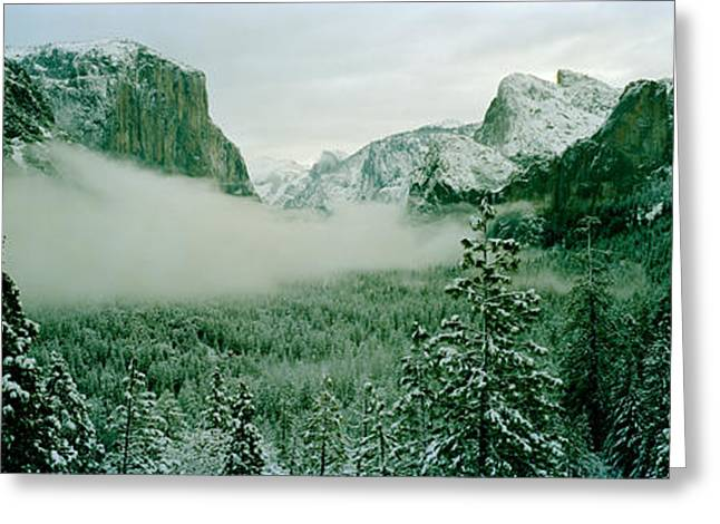 Trees In A Forest, Yosemite National Greeting Card