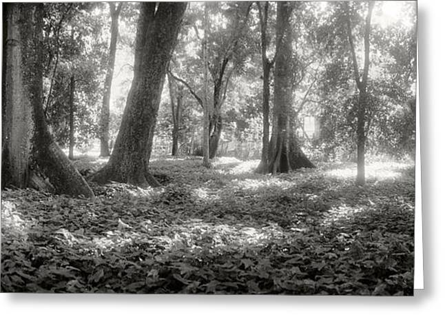 Trees In A Garden, Jardim Botanico Greeting Card by Panoramic Images