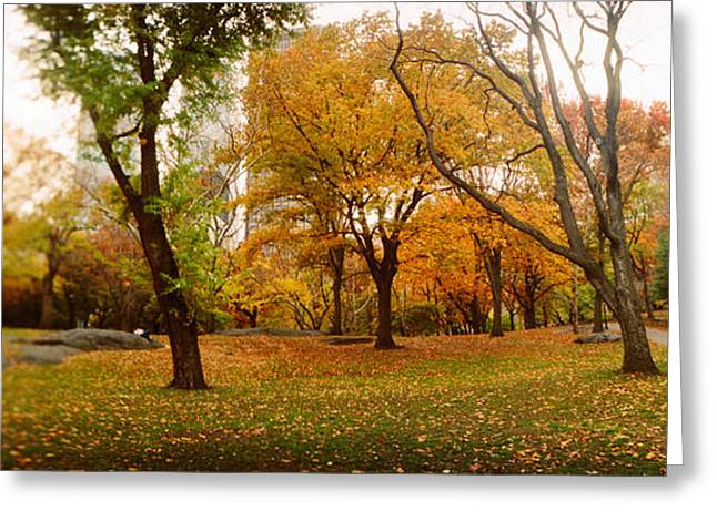 Trees In A Park, Central Park Greeting Card