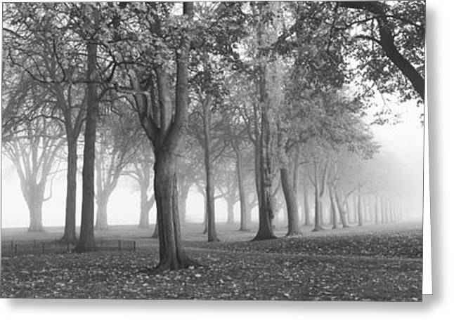 Trees In A Park During Fog, Wandsworth Greeting Card by Panoramic Images