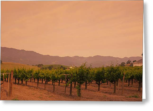 Trees In A Vineyards, Napa Valley Greeting Card by Panoramic Images