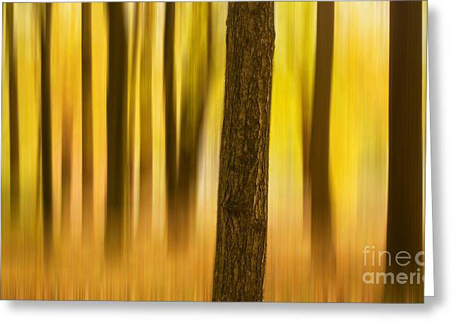 Trees In Autumn Forest Greeting Card