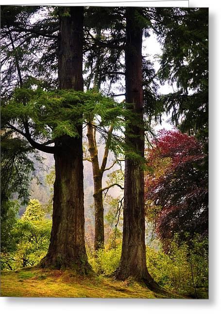 Trees In Autumn Glory. Scotland Greeting Card by Jenny Rainbow