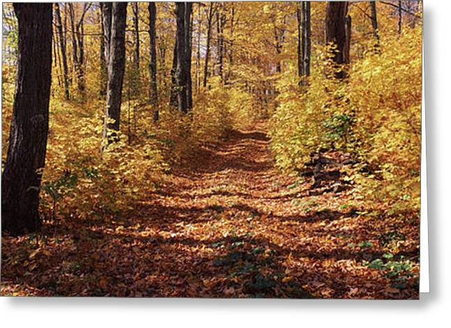 Trees In Autumn, Stowe, Lamoille Greeting Card by Panoramic Images