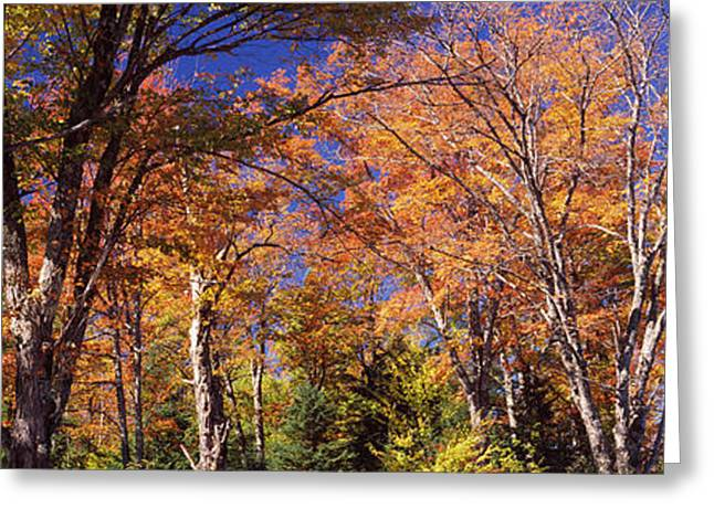 Trees In Autumn, Vermont, Usa Greeting Card by Panoramic Images